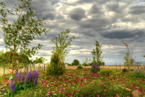 Extensión de campo, con flores y árboles