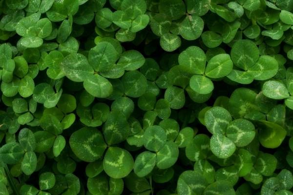 Plantas con hojas verdes