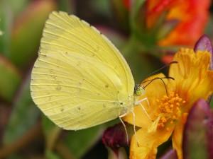 Postal: Una mariposa en la flor