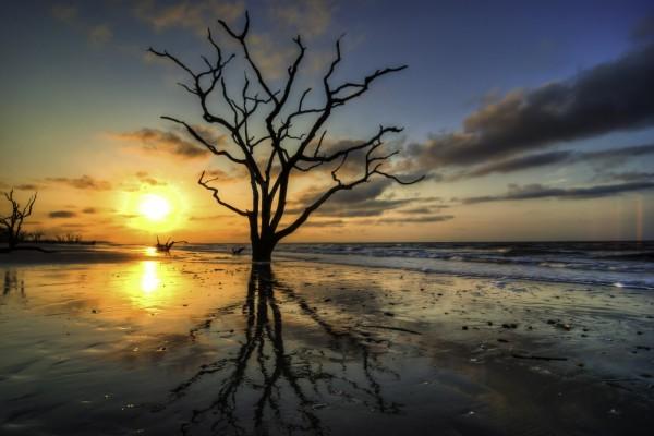 Un árbol en la orilla del mar al atardecer