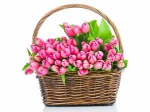 Cesta con tulipanes rosas