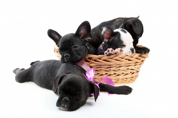 Cuatro lindos cachorros
