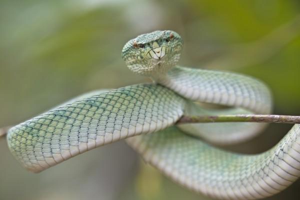 Serpiente en una fina rama