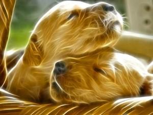 Postal: Dos lindos perros