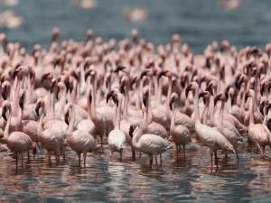 Un grupo de flamencos en el agua