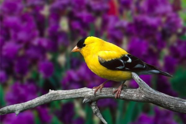 Lindo pájaro en la rama