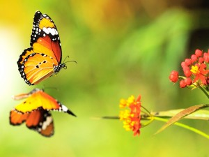Postal: El reflejo de la mariposa