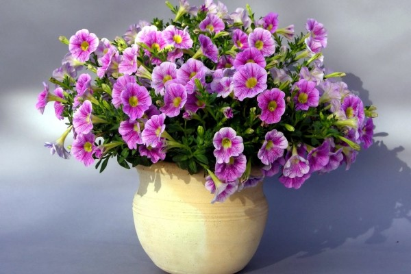 Flores lilas en un cuenco