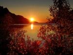 Hojas en la puesta del sol