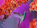 Colibrí en las flores recolectando el polen