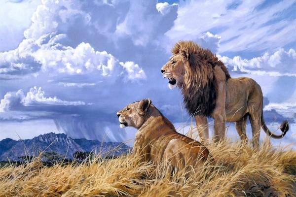 Pareja de leones, bajo el cielo azul y nubes