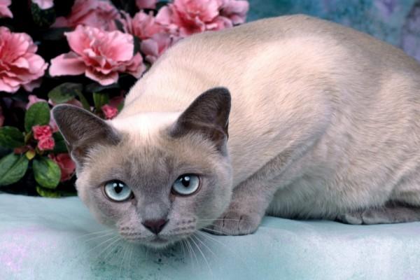 Un gato y flores