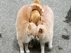 Abrazo gatuno