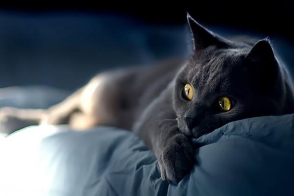 Gato negro tumbado en la cama