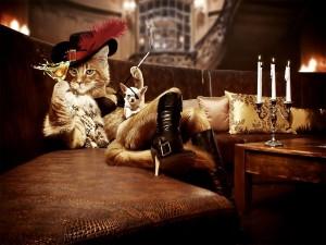 El gato con botas y un chihuahua
