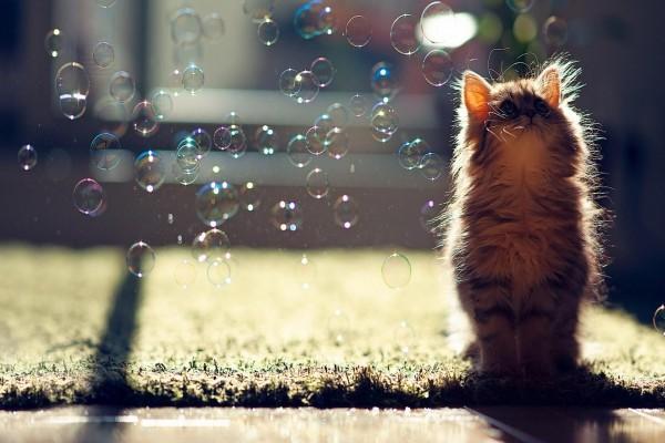 Gatito mirando las pompas de jabón
