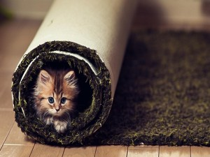 Postal: Gatito dentro de la alfombra enrollada