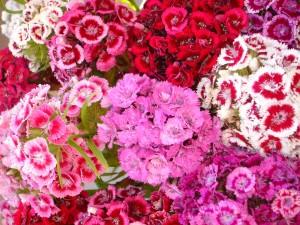 Flores de bonitos colores