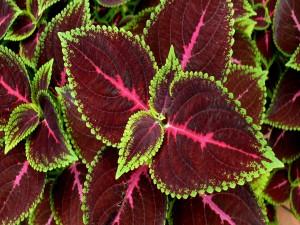 Planta con bonitos colores