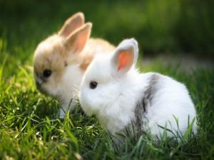 Dos pequeños conejos en la hierba