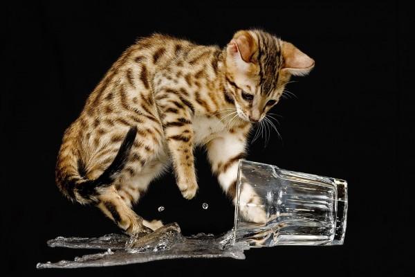 Mirada atenta al volcar el vaso