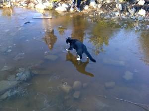 Gato caminando por el agua helada