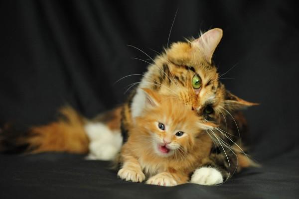 Gata y su pequeño