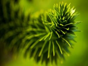 Planta con hojas triangulares