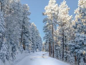 Árboles y carretera cubiertos de nieve
