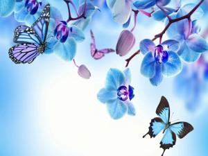Mariposas entre las flores
