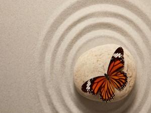 Postal: Mariposa sobre una piedra