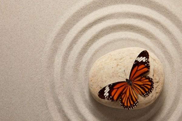 Mariposa sobre una piedra