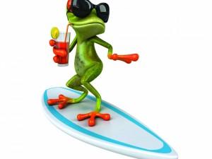 Rana practicando surf