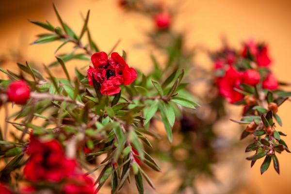 Flores en las ramas del arbusto
