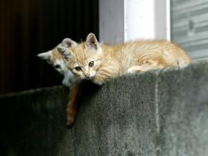 Postal: Gatos vigilando