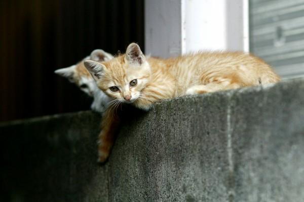 Gatos vigilando
