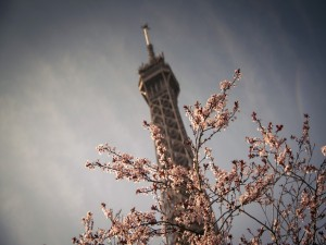 Postal: Vista superior de: La Torre Eiffel (París, Francia)