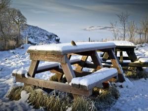 Pajarito sobre una mesa cubierta con nieve