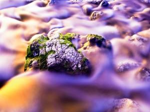 Rocas con musgo y agua