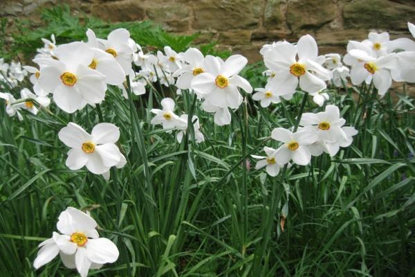 Bonitas flores blancas en el jardín