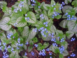 Postal: Planta con hojas y pequeñas flores