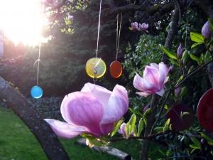Flores en la rama, recibiendo la luz del sol