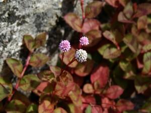 Postal: Tres florecillas redondas