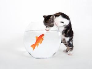 El gato y el pez