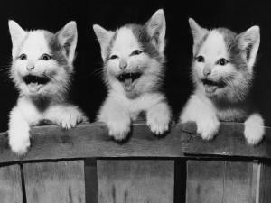 Postal: Las caras divertidas del gato