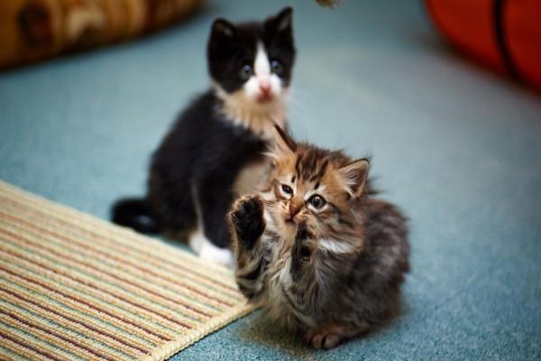 Gatito tocando las palmas