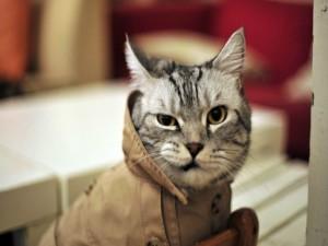 Postal: Gato con gabardina