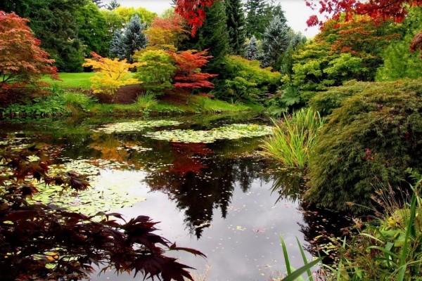 Un estanque entre los árboles