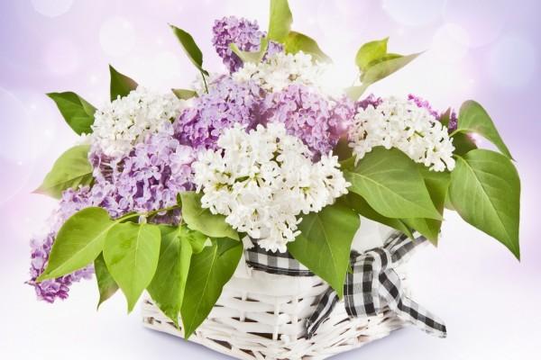 Canasta con flores, color blanco y púrpura