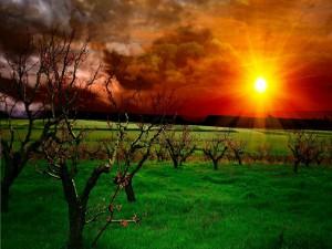 Luz del sol, sobre la hierba y los árboles